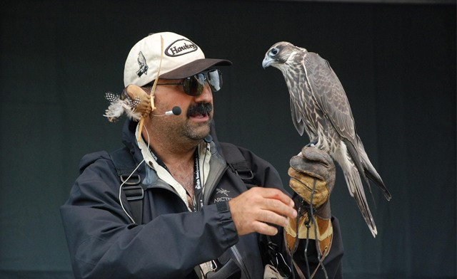FLASH SALE! Up to 78% off Falconry for One, Two or Four People in Acton