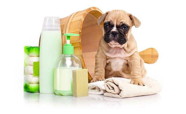 Up to 55% off Dog Grooming or a Pet Nail Trim