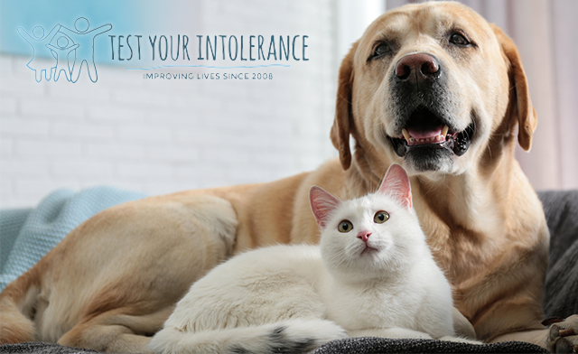 Up to 68% off Pet Allergy Tests