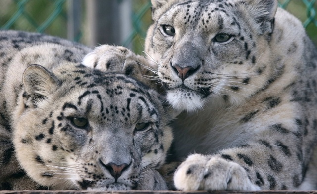 Up to 57% off Admission Passes to Jungle Cat World