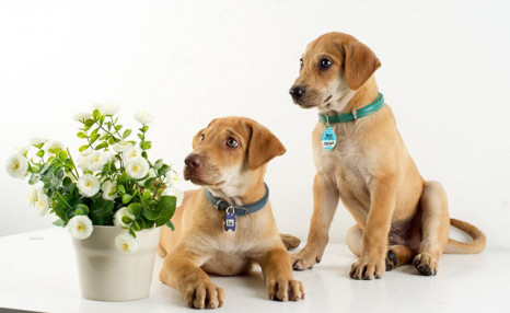 Up to 70% off Personalized Pet Tags from Photobook Canada