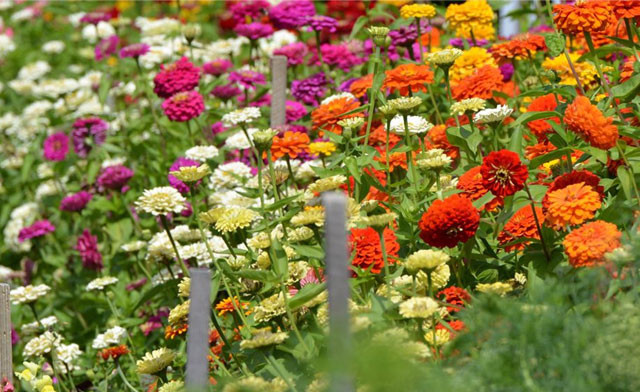 $10 for $20 towards Nursery Stock including Trees, Shrubs, Evergreens, Soil and More
