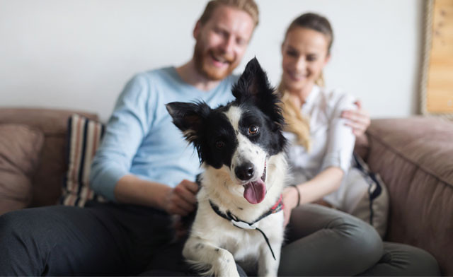 $10 for an Online Course on Pet and Animal Care (a $119 Value)