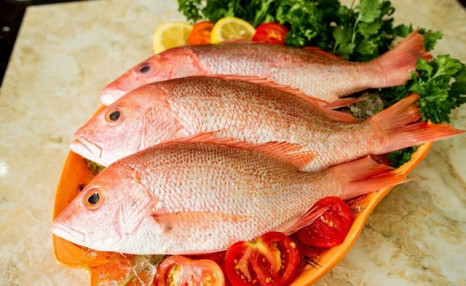 Click to view $99 for 16 lbs of Red Snapper (a $125 Value)