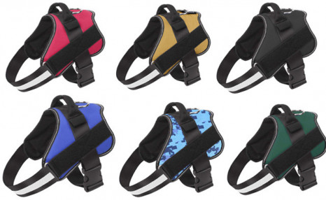 $19.95 for a Bolux Dog Harness (a $59 Value)