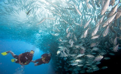 Click to view $30 for a Discover Scuba Diving Experience (a $60 Value)
